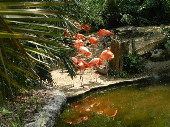 Tampa's Lowry Park Zoo: Pink Flamingo
