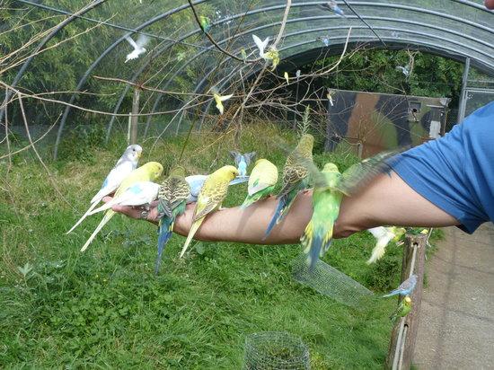 Spaycific'Zoo : volière aux perruches