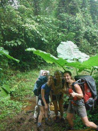 Children's Eternal Rain Forest: Giant Gunnera insignis leaves