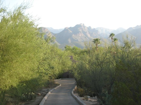 Canyon Ranch in Tucson : Surrounding Area