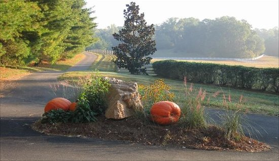 Blackberry Farm: Pumpkins in Meadow