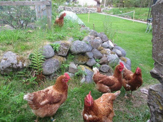 Coig Na Shee: Even the chickens were friendly!
