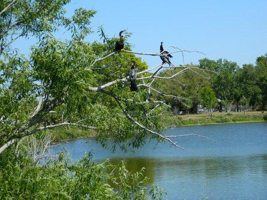 Venice Area Audubon Society : Hundreds of birds nest on the island