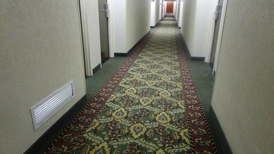Hampton Inn Washington: Hall Way
