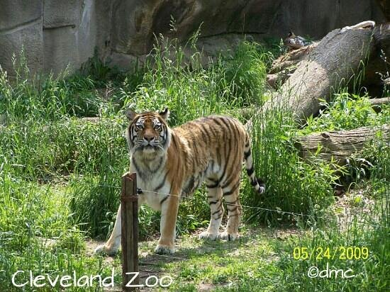 Cleveland Metroparks Zoo: what are you doing?