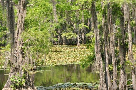 Captain Ron S Swamp Tours
