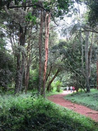 Nairobi Arboretum: a walking path