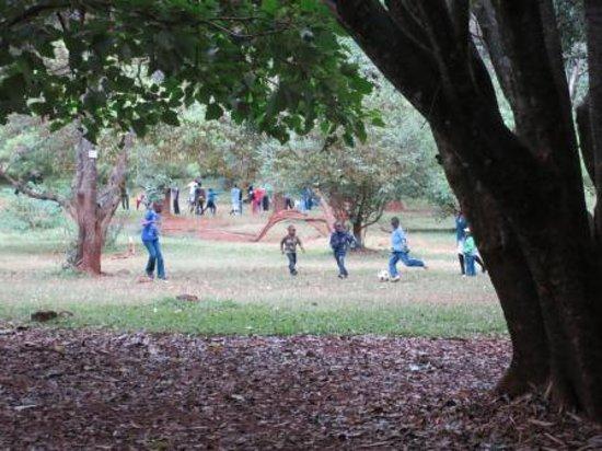 Nairobi Arboretum: the main grassy field