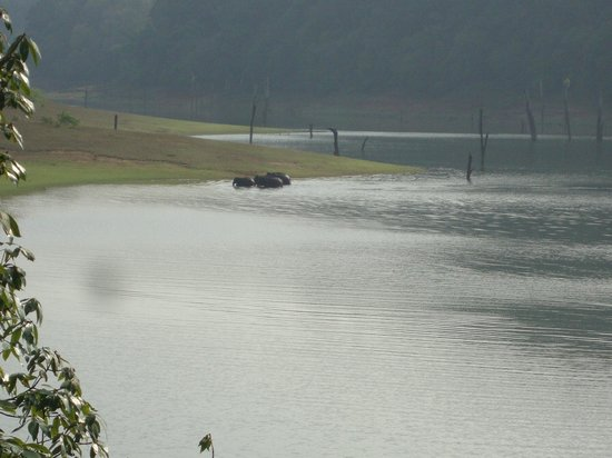 KTDC Lake Palace Thekkady: Elephants..