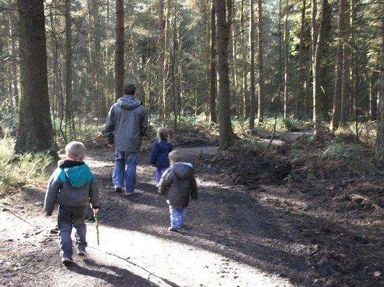 Darwin Forest Country Park: walks in the site woods