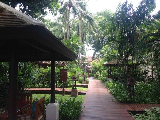 Chaweng Regent Beach Resort: このようなロケーションなので蚊がいるので蚊取りグッズは必要でしょう。(それでも刺されますが)