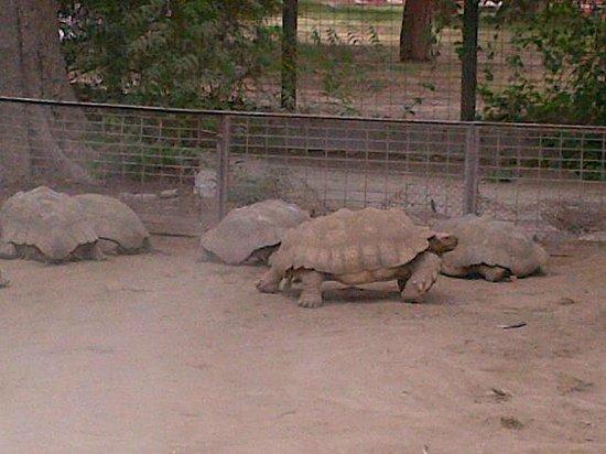 visit to karachi zoo App90-01 karachi: february 01 – sindh chief minister syed murad ali shah   syed murad ali shah being shown a python at karachi zoo during his visit.