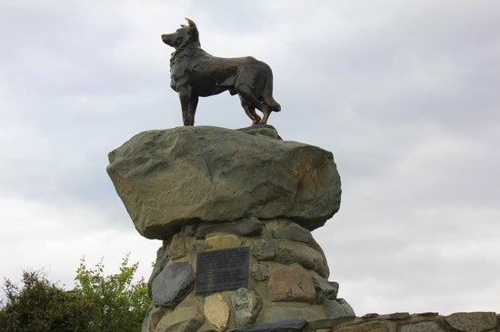 Mackenzie District, Nouvelle-Zélande : Statue of a collie, Lake Tekapo, New Zealand.