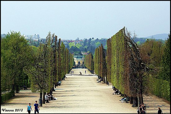 Trees Lined Up Picture Of Austria Trend Parkhotel Schoenbrunn
