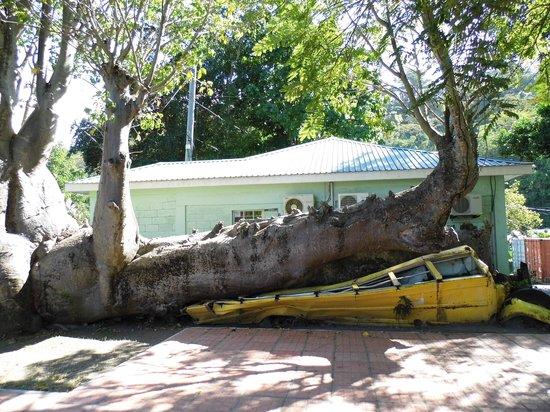 Dominica Botanic Gardens: bus