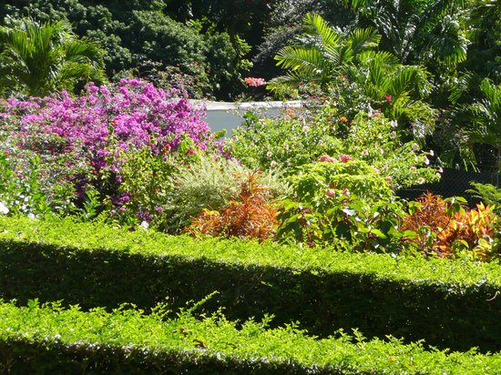 Dominica Botanic Gardens: lots of colours