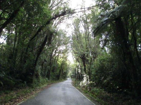 Dawson Falls: The drive up