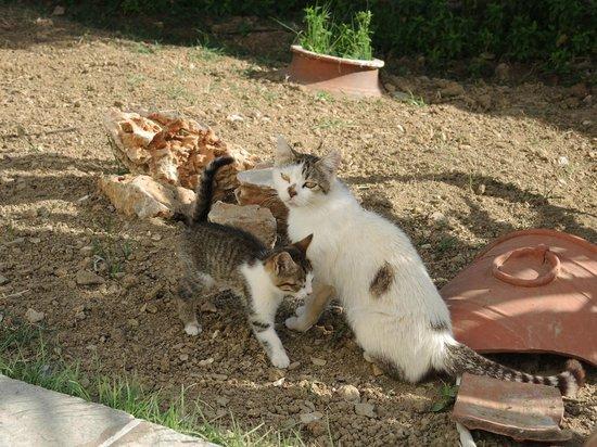 Arhontou: le paradis des chatons