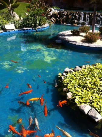 Playa Grande Resort: Fish pond at playa grade