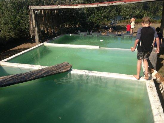 The Hatchery: Plunge pools