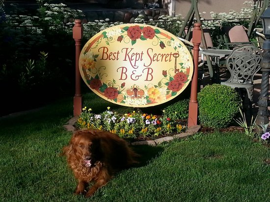 Best Kept Secret B & B: Jessie  #1 Resident!