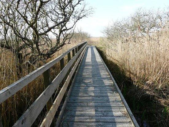 Crimond, UK: Fen Hide at Loch of Strathbeg