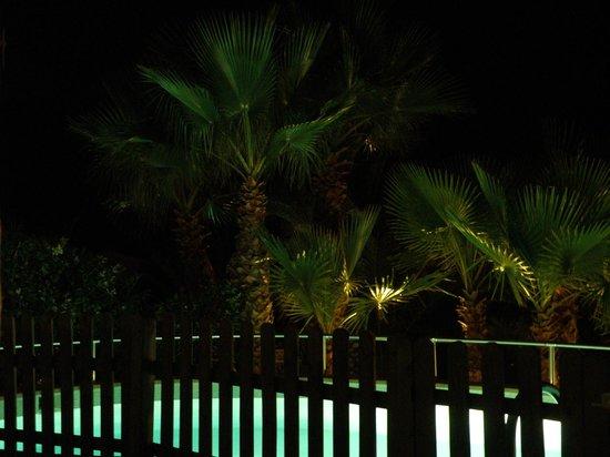 Villas Etnia: la piscina con sus palmeras