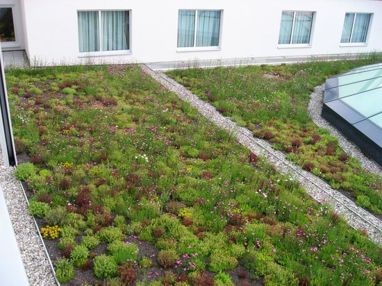 Steigenberger Hotel Drei Mohren: 'Living roof' to the rear