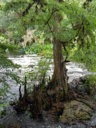 Hillsborough River State Park: Hillsborough River Rapids