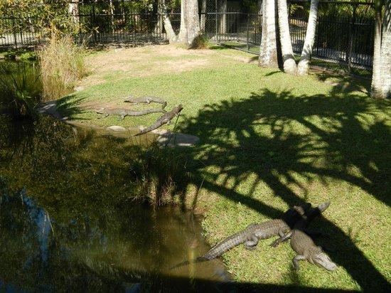 Australia Zoo: sweeties with sharp teeth