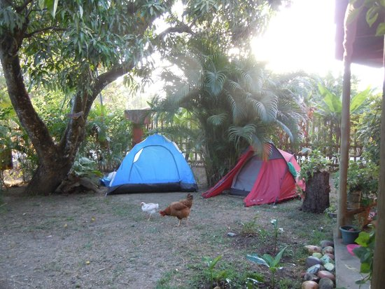 Las Mariposas : Camping meadow at the hostel
