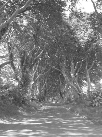 The Dark Hedges: This Road Would Be Spooky At Night!