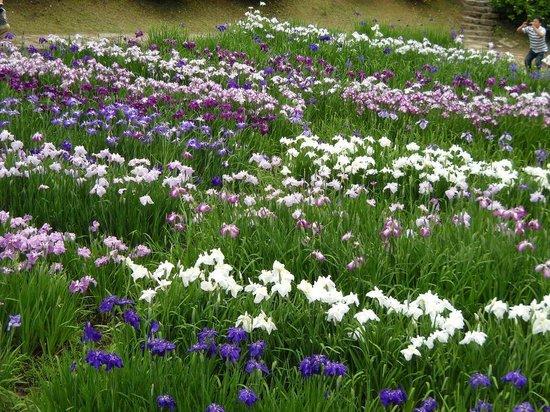 Takidani Hanashobu Garden: 色とりどりの園内