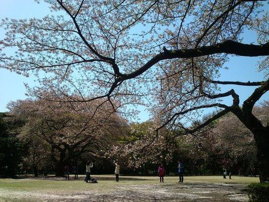 Shinjuku Gyoen National Garden: This is my view while enjoying breakfast
