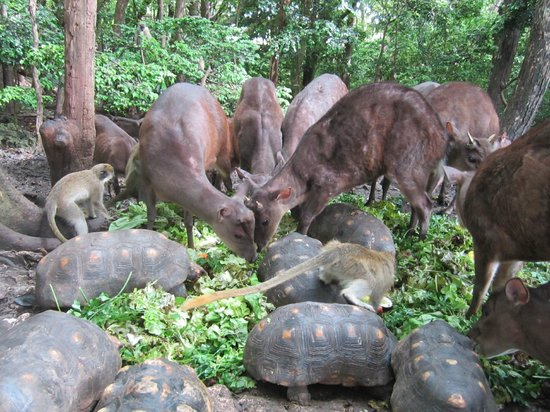 Barbados Wildlife Reserve: Feeding time!