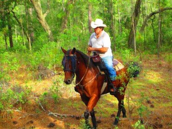 Lady Hawk Farm : Horses are my oassion