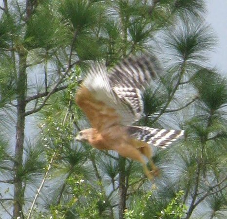 Lady Hawk Farm : wildlife abounds