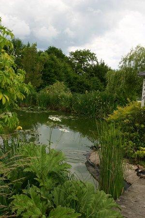 L'Abri-Cotier : Le jardin et son étang aux canards.