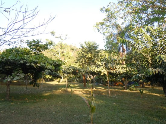 Mal Pais Surf Camp & Resort: Tent camping area