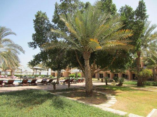smartline Ras Al Khaimah Beach Resort: Am Hauptpool