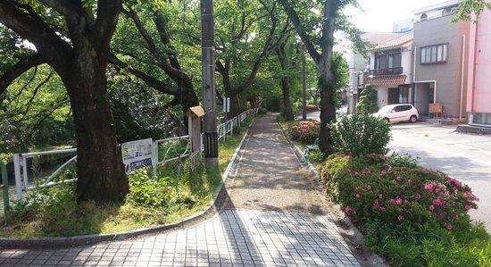 Dormy Inn Toyama: Chery tree way