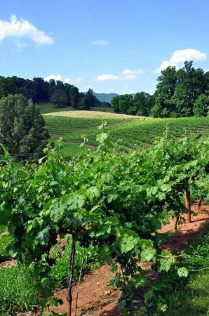 Addison Farms Vineyard: The vines