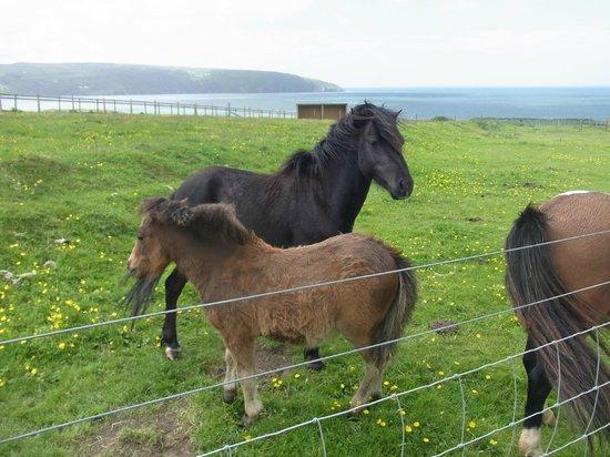 Cardigan Island Coastal Farm Park: animals at the park