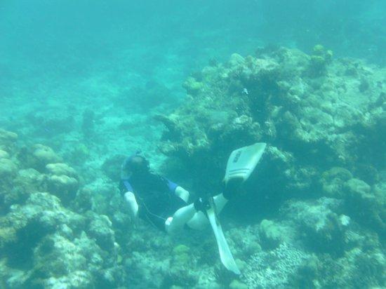 Aquamarine Beach Houses: The Coral Tour