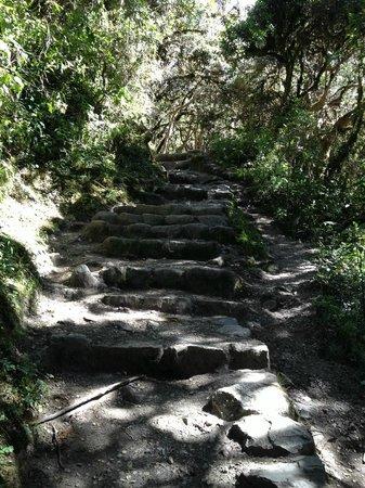 Enigma: Inca trail