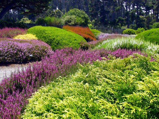 Heath U0026 Heather Collection At Mendocino Coast Botanical Gardens