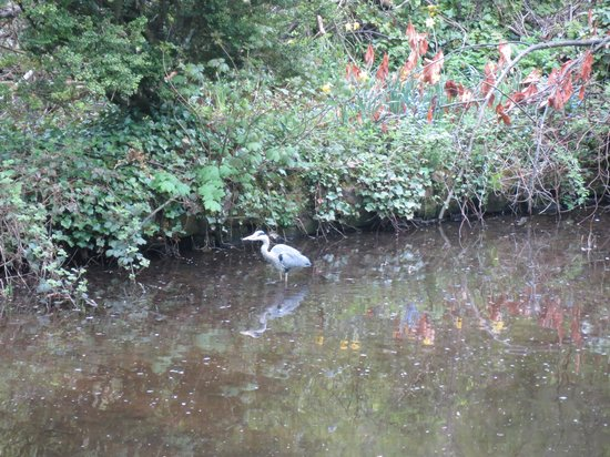 Wood Grove Bed & Breakfast: It is a heron right ?