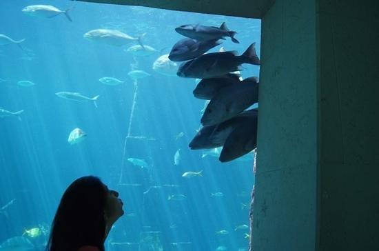 Marine Habitat at Atlantis: aquarium