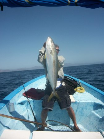Coco Cabanas Loreto: Big Yellow Tail