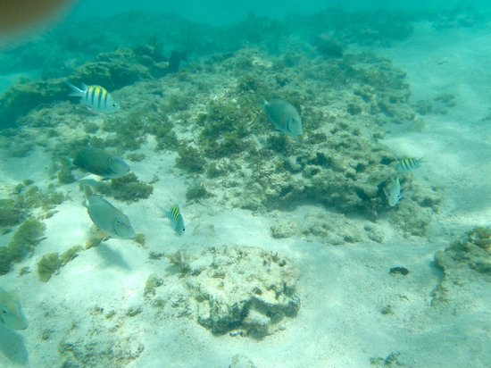 Majestic Colonial Punta Cana Snorkeling